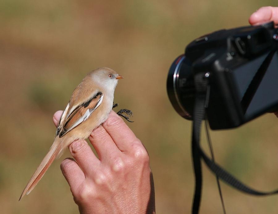 Sfaturi pentru fotografii incepatori
