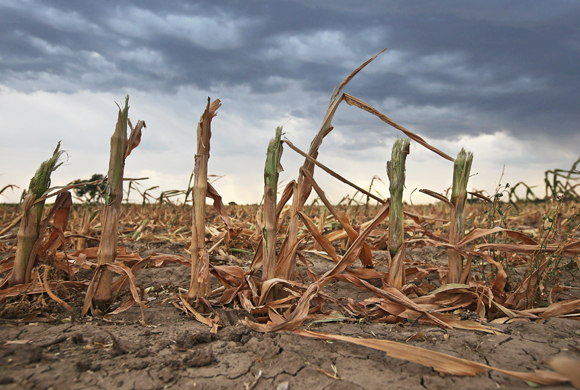 Incalzirea globala si agricultura